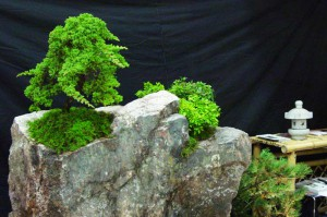 Import Shop Messe in Berlin | kokeniwa japanische Gartengestaltung | Heiko Voß