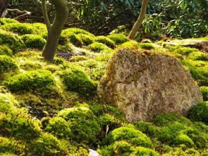 moosgarten japangarten steine