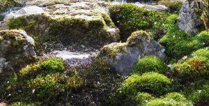 Japangarten moos steine